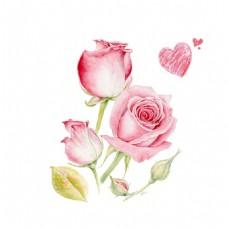 粉色手绘玫瑰花png免扣元素