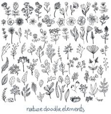 迷迭香线条花朵树叶桂冠矢量插画