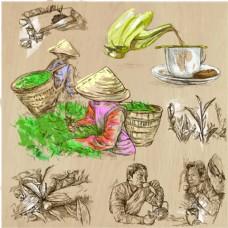 手绘采茶的人物插画
