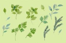 清新水彩绘叶子插画