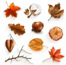秋天丰收的植物插画