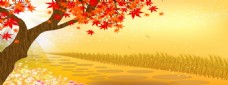 枫树落叶banner背景