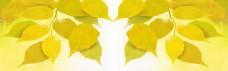 黄色树叶banner背景