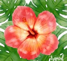 手绘水彩热带花卉