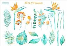 水彩花朵插画
