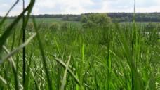 高清草丛风景视频素材