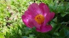 花卉花瓣视频素材