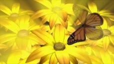 阳光下的花卉视频素材