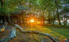 风景图 树木