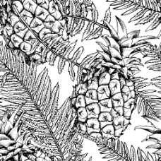 黑白手绘菠萝和叶子背景