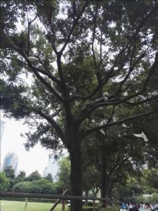 树上的白鸽
