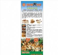 茶树菇宣传介绍展架