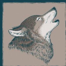 一只嚎叫的狼