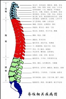 脊柱相关疾病图