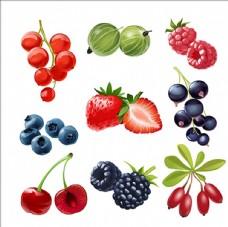一组多汁成熟的浆果