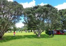 新西兰海滨公园风景