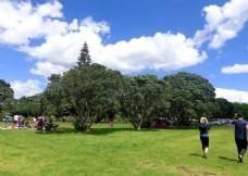 新西兰海滨公园 风景