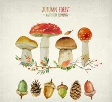秋天蘑菇果实