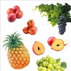 葡萄 菠萝 油桃