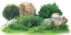 小树灌木丛和假山石