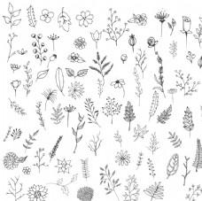 简洁黑色描边手绘花卉