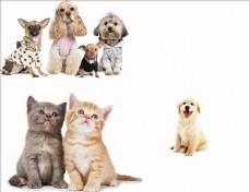 宠物猫狗素材