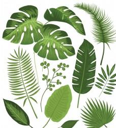 夏天绿叶 叶子植物矢量
