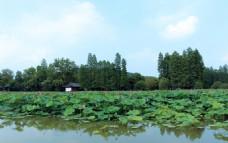 武汉东湖风景
