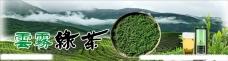 茶背景 云雾绿茶