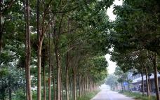 村村通公路
