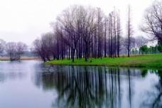 河边光秃秃的树木