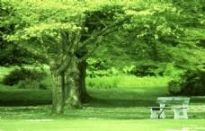 大树树荫下的白色长椅