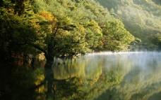 倒映在水中的大树