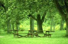 大树树荫下的长椅