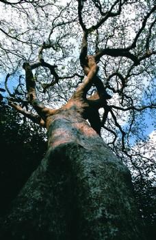古树摄影图