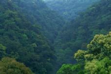 绿色茂密的山林