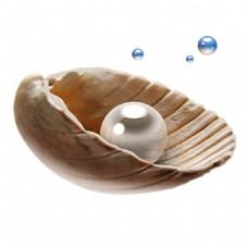 美丽的贝壳珍珠