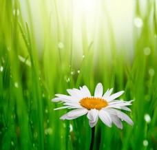白色花朵背景素材下载