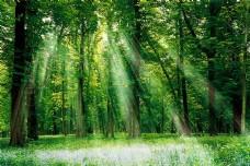 3D高清树林日光背景墙