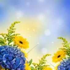 美丽花丛背景素材下载