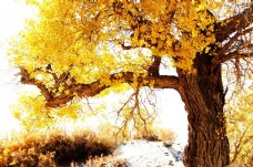3D彩绘金色古树背景墙