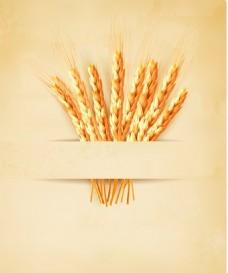 小麦相关矢量素材