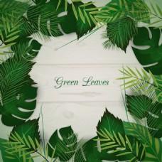 森系花草树叶绿色棕榈芭蕉枫叶背景