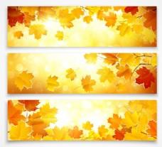 秋日精美枫叶背景矢量
