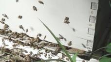蜜蜂的蜂巢