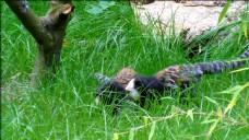 在草两狨猴