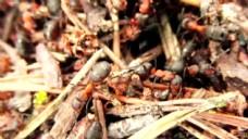 蚂蚁cc-by natureclip群