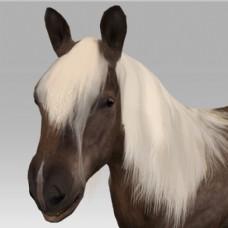 卡通动物马匹模型