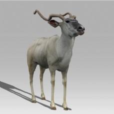 卡通动物鹿模型