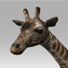 卡通动物长颈鹿模型